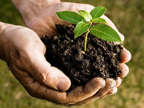 The local footprint of Circular Economy is organic!
