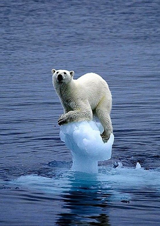 global warming, climate change, polar bear, icebergs, titanic, fossil fuels, Greenland, ice-sheet, shipping, climate change deniers, USA