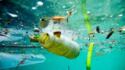 Towards a plastic bottled world?