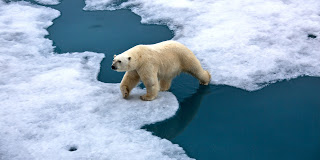 Climate-Change-polar-bear