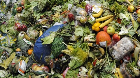 Food waste prevention becomes mainstream: from governments to startups