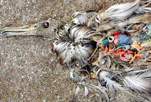 marine litter, wasteless future, ocean plastics, plastic pollution, food chain, seabirds, fish, microplastics