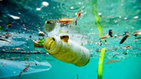 Towards a plastic bottled world?